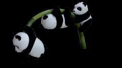 Panda Cubs on Bamboo