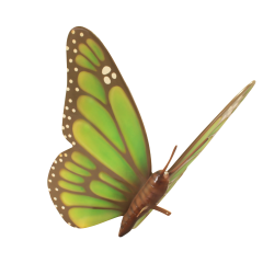 Big Green Butterfly