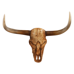 Bull Skull