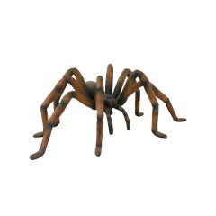Recluse Spider Brown