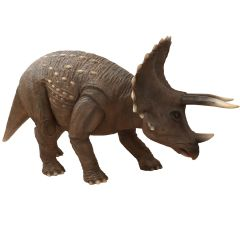 Life Size Triceratops Statue 427 Cm