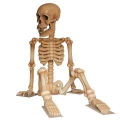 Skeleton 4m
